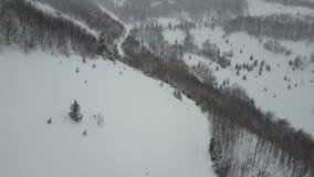 Satellietbeeld van lege bergweg tussen sneeuwpijnboombomen stock footage