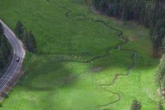 Satellietbeeld van Longhorn-Vee stock foto's