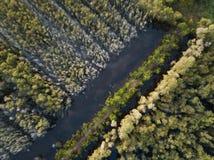 Satellietbeeld van Melaleuca-boombos stock afbeelding