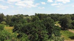 Satellietbeeld van mooi bos met grote groene bomen en blauwe hemel op zonnige de zomerdag stock footage