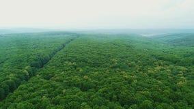 Satellietbeeld van onschuldig bos, volledig van dicht hout die beide kanten kweken 4K stock videobeelden