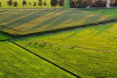 Satellietbeeld van paarden op de looppas en de lange schaduwen stock foto's