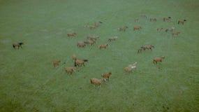 Satellietbeeld van paardkudde tijdens bewolkte dag royalty-vrije stock fotografie