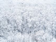 Satellietbeeld van snow-covered bomen in bos stock fotografie