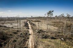 Satellietbeeld van vreselijke ontbossing, registreren, milieuvernietiging, Polen royalty-vrije stock afbeeldingen