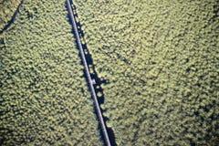 Satellietbeeldmoeras Viareggio stock foto