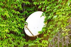 Satellit- maträtt mellan filialen av träden, installationen av en satellit- maträtt, tvkommunikation arkivfoton