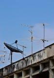 Satellit- maträtt- och antennTV Fotografering för Bildbyråer
