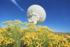 Satellite dish in field of flowers Royalty Free Stock Photos
