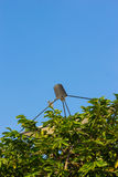 Satellite dish hide in bush Stock Photography