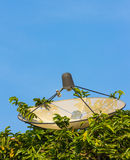 Satellite dish hide in bush Stock Image