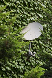 Satellite dish mounted on the wall. Stock Photo