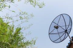 Satellite dish transmission data. Satellite dishes with background bamboo tree Royalty Free Stock Photography