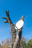 Satellite Dish. On a tree Stock Images