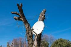 Satellite Dish. On a tree Stock Photo