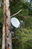 Satellite dish on a tree. Satellite dish on a tall tree Stock Images