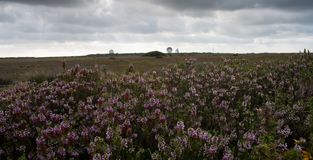 Goonhilly Satellite Dishes and Heather royalty free stock photo