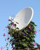 Satellitenantenne mit Blumen Lizenzfreies Stockfoto