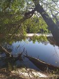 Satilla river campsite. Water, nature stock photography