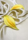 Satin cloth with petals Stock Image