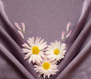 Satin fabric with daisies Royalty Free Stock Photography