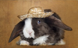 Satin Mini Lop rabbit facing with a straw hat, Royalty Free Stock Images