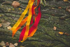Satin ribbons of bright colors on a moss-covered tree. Close up. Theme holiday, wedding stock images