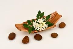 Satinwood Andaman, китайское дерево коробки, косметическое дерево расшивы, оранжевый жасмин, оранжевое jessamine, древесина сатин стоковые изображения rf