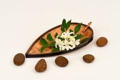 Satinwood Andaman, китайское дерево коробки, косметическое дерево расшивы, оранжевый жасмин, оранжевое jessamine, древесина сатин стоковые изображения