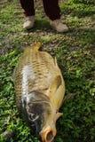 Satisfaction - fiishing the biggest carp. Fish Royalty Free Stock Photos