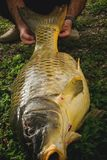 Satisfaction - fiishing the biggest carp. Fish Stock Images