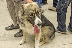 Satisfaction status. A dog amoung people Royalty Free Stock Photo
