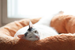 Satisfied cat Royalty Free Stock Photography