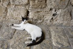 Satisfied cat at home in Jaffa Israel. Satisfied cat relaxed at home in Jaffa Israel Royalty Free Stock Photo