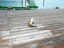 Satisfied cat on the marina waiting for fishermen to catch royalty free stock image