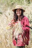 Satisfied farmer looking at the crop with a bunch of ripe wheat Royalty Free Stock Photography