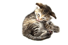 Satisfied kitten Stock Images