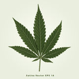 Sativa Photos stock