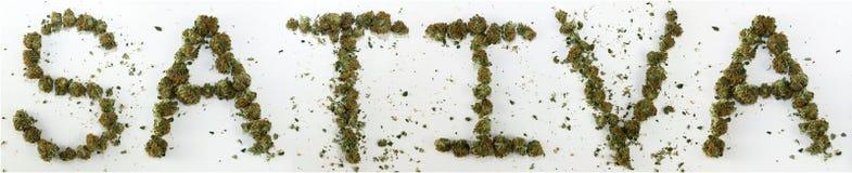 Sativa buchstabiert mit Marihuana Stockbilder
