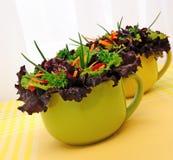 sativa grönsak för lactucasallad Royaltyfri Foto