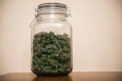 Sativa huvud för cannabismarijuana i lagret royaltyfria foton
