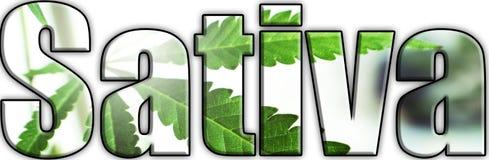 Sativa Logo With Marijuana Leaves Inside Lettering royalty free stock images