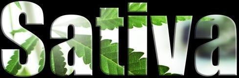 Sativa marijuana Logo High Quality arkivfoto