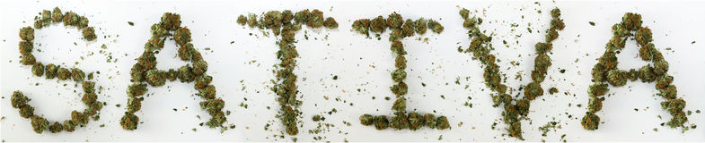Sativa soletrado com marijuana Imagens de Stock