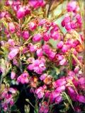 Sativa wilde bloem van Erica op tot bloei komende achtergrond en behang in bovenkant hoog - kwaliteitsdrukken royalty-vrije stock foto's