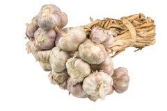 sativum葱属的大蒜 图库摄影