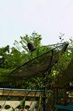 Satlellite-Teller-Sendungsnetz auf Garten Stockfotos