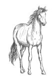 Satnding white horse sketch portrait. Beautiful white horse standing. Pencil sketch portrait of stallion with wavy mane, tail, hoofs Stock Images