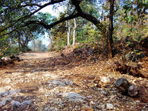 Satpura forest nature beauty Stock Photography
