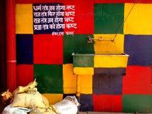 Satricial fundersam politisk ordstäv som är färgrik royaltyfri fotografi